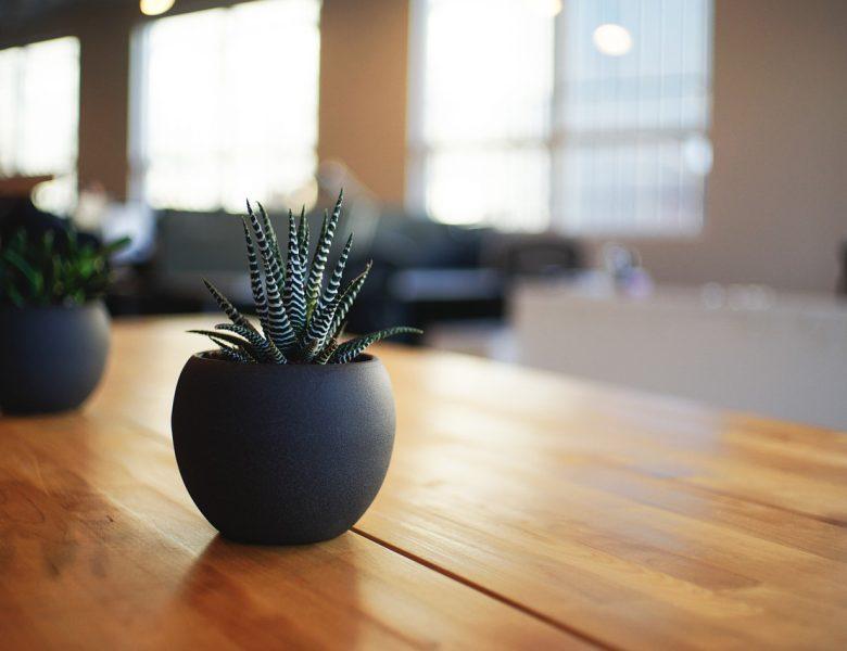 Wnętrza pełne roślin – sposób na kontakt z naturą bez wychodzenia z domu