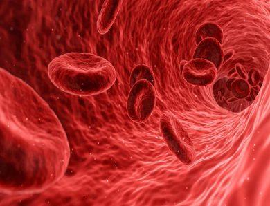 Hemofilia, czyli choroba dotykająca coraz więcej osób na świecie